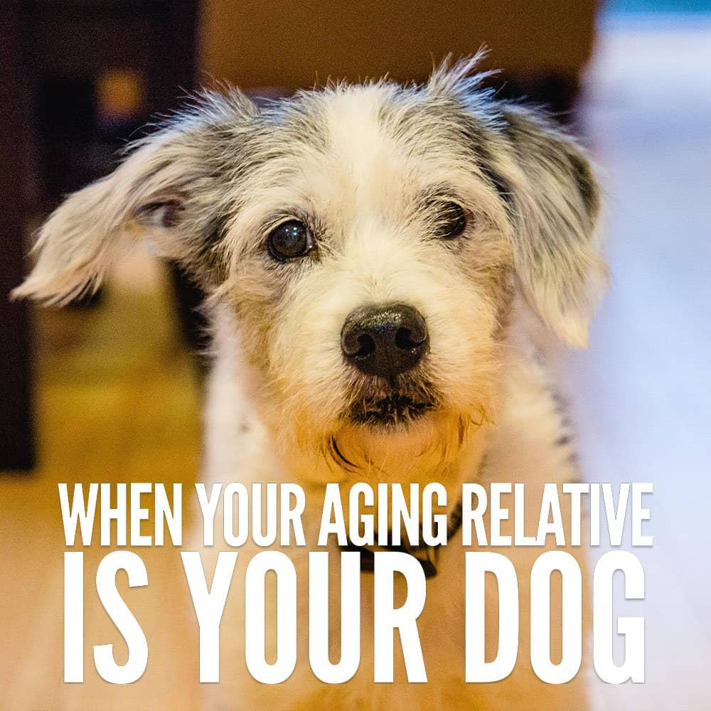 When Your Aging Relative is Your Dog