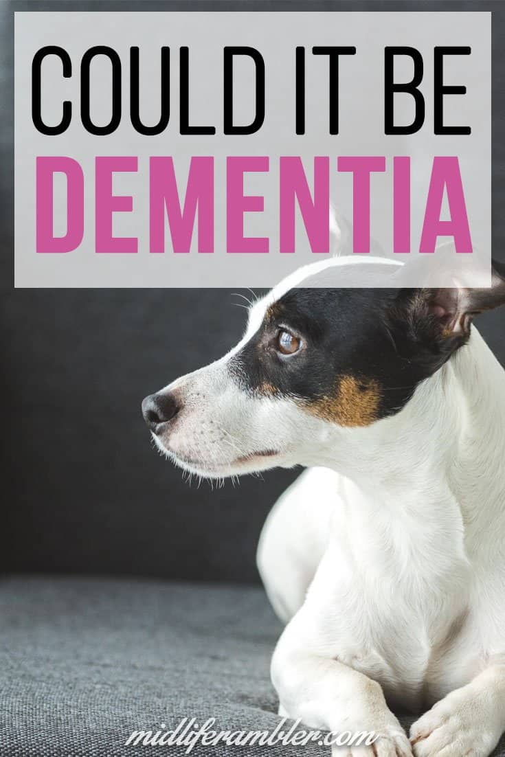 Worried dog - is it canine dementia?