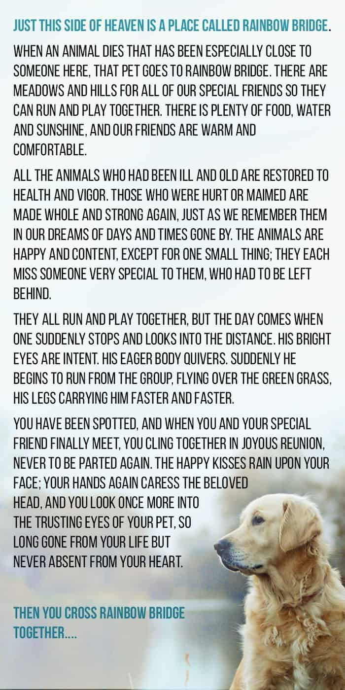 The Rainbow Bridge Poem about When Dogs Die.