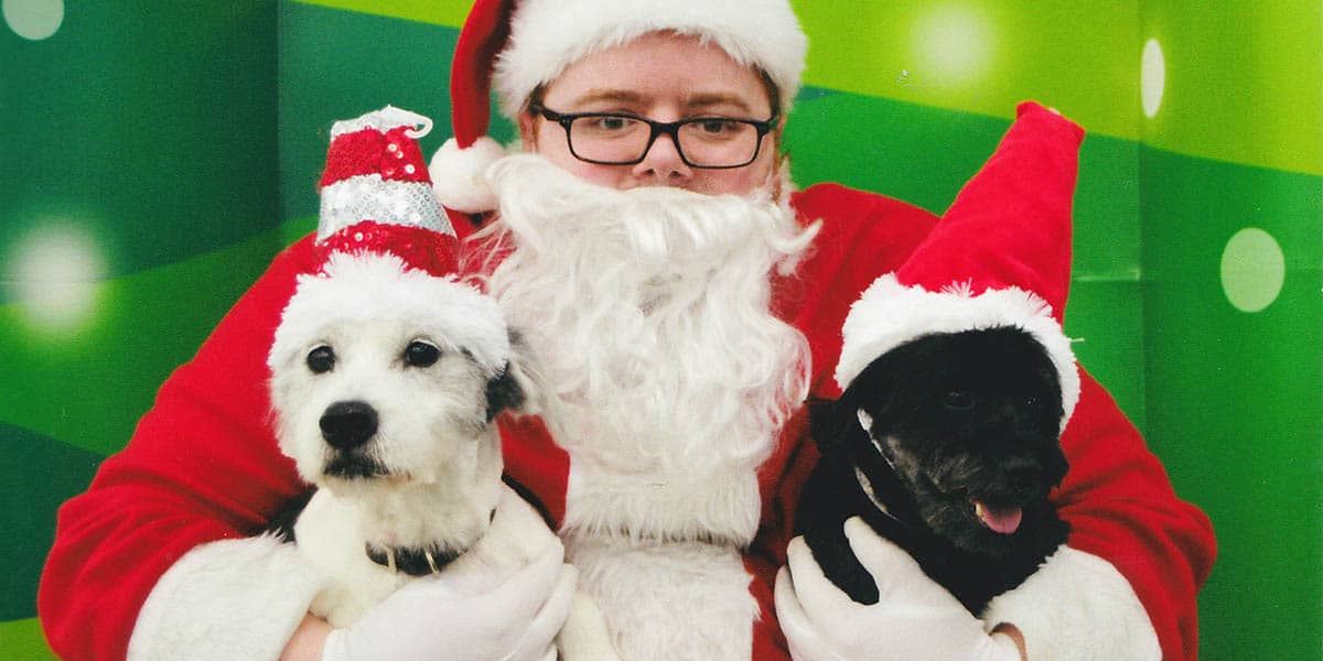 Christmas Card Ideas For Empty Nesters Midlife Rambler
