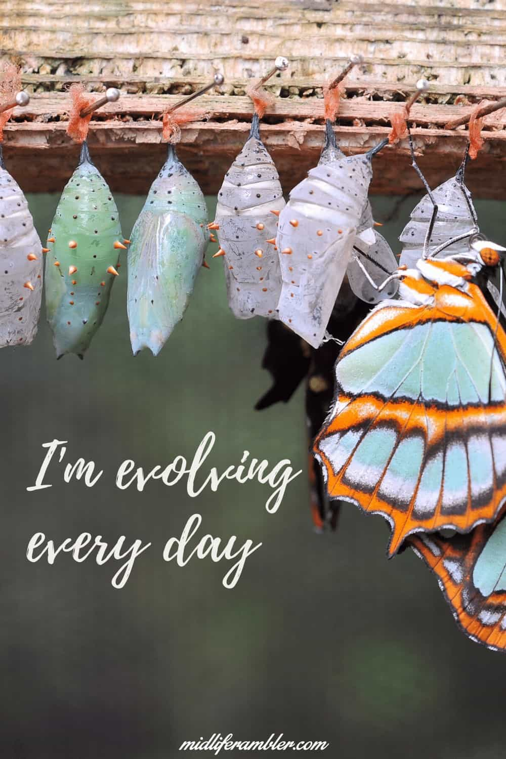 Affirmations for Self-Compassion - I'm evolving every day.