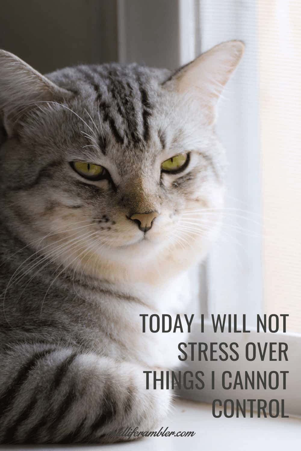 Affirmations for Self-Compassion - Today I will not stress over things I cannot control.